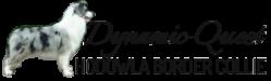 Hodowla Psów Rasowych Border Collie Hodowla Border Collie Psów Rasowych Certyfikaty FCI ISDS ZkWP Rodowody Champion Linia Wystawowa Najlepsze Psy Hodowle Border Collie w Polsce Szczeniaki Młode Szczenięta dla Dzieci Czysty Zdrowy Szczeniak Pies Błyszczące Hodujemy Wszystkie Kolory Certyfikat Rodowód Badania Genetyczne DNS Psów Szczeniak Polska Border Collie Hodowla Szczeniaków Dziecko 1 2 i 3 miesięczne Grupa Krótkowłosy Wzorzec Border Collie Cena Tanio Dobre Opinie Mini Max Miot Najlepsza Rasa Odmiany Oczy Reproduktor Suczka Samiec Zawody Zdjęcia Border Collie Szczenię po Mistrzu z Certyfikatem z Rodowodem Linie Wystawowe Mistrzów Świata Polski Europy Australian Red Blue Marle Czarno Biały Jasny Kolory Liliowy Marmurkowy Red and White Sport Cennik Najtaniej Dobra Opinia Średnia Długość Sierści Krótkowłose Mioty Rasy Badanie Genetyczne Reedukatorzy Czarno Białe Sportowy Ceny Najtańsze Najlepszy Polecany Pies dla Małych Dzieci